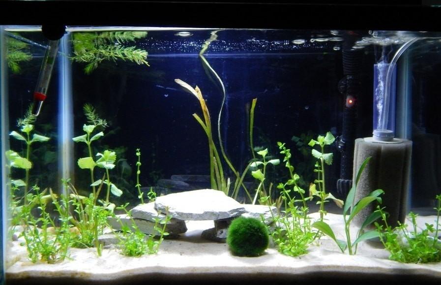 Какой лучше фильтр для аквариума выбрать?