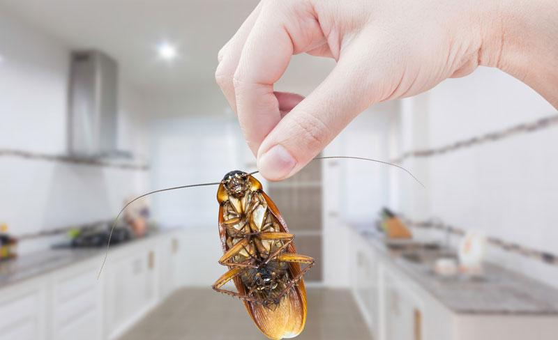 Лучшая отрава от тараканов на сегодняшний день